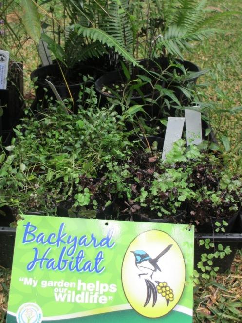 Creating habitats!