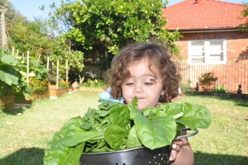 My lil' girl helping out in the garden and here with a lot of spinach!