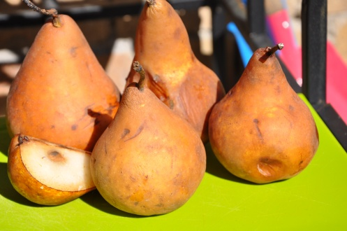 Some pears looking to be saved from the worm farm!
