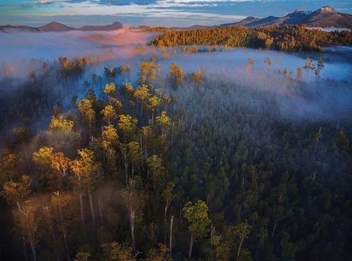 Tasmania Forest 3