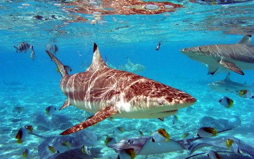 Sharks-and-Reef-Fish-1600x1000